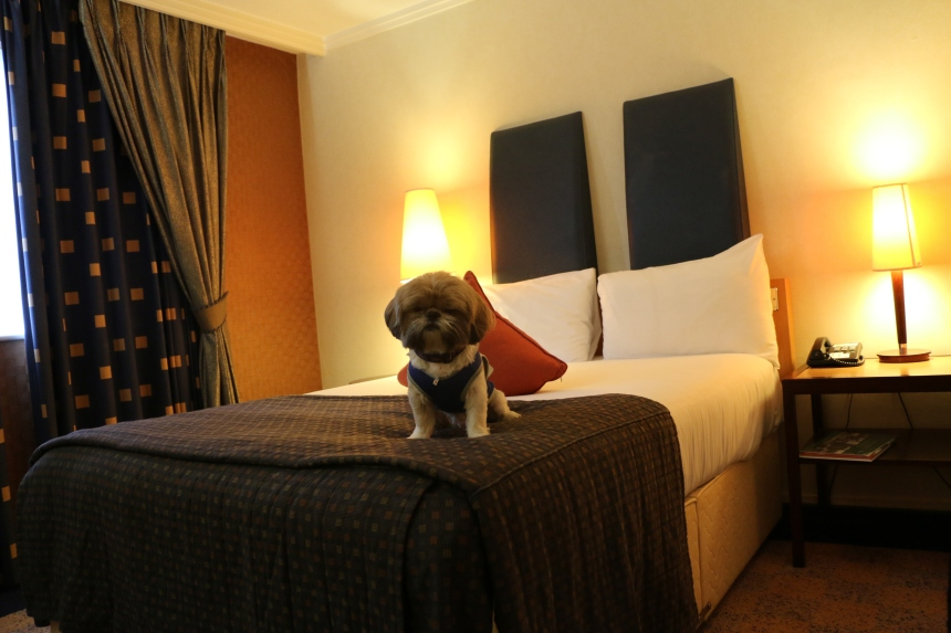 Pet friendly hotel so Izo was allowed to stay with me- Good!