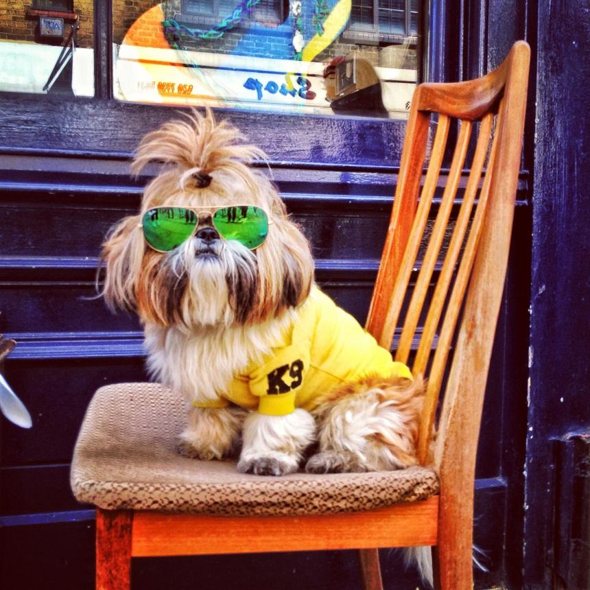 I might look like a dog, but I am not! I am cool young man.